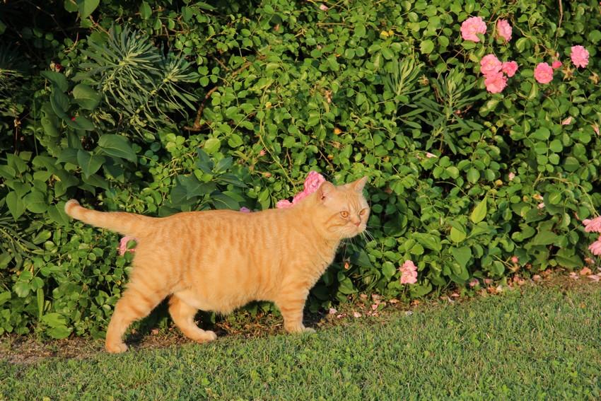Gatsby au jardin