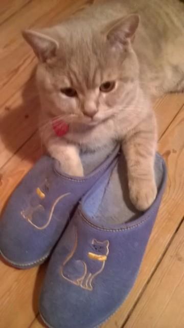 Naruna, bien dans ses pantoufles !