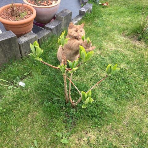 Le jeune arbuste va-t-il apprécier les caresses de Litchi ?