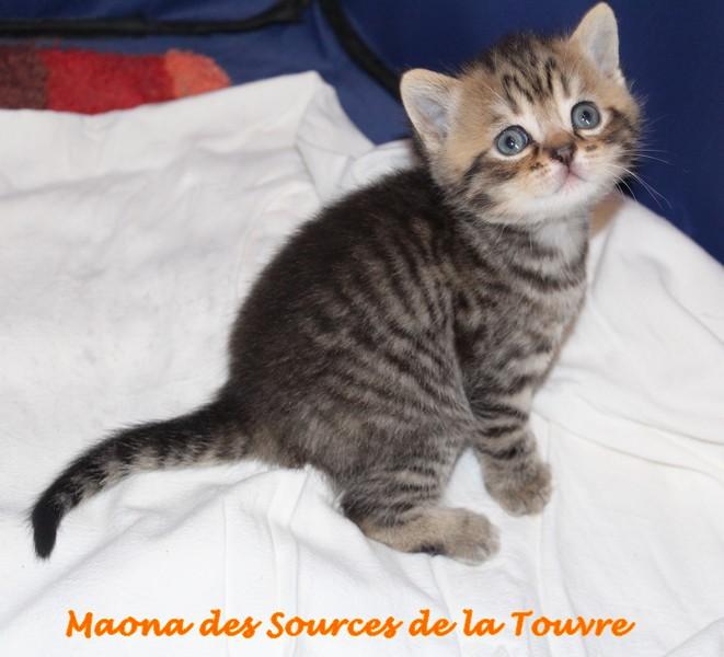 maona_6092