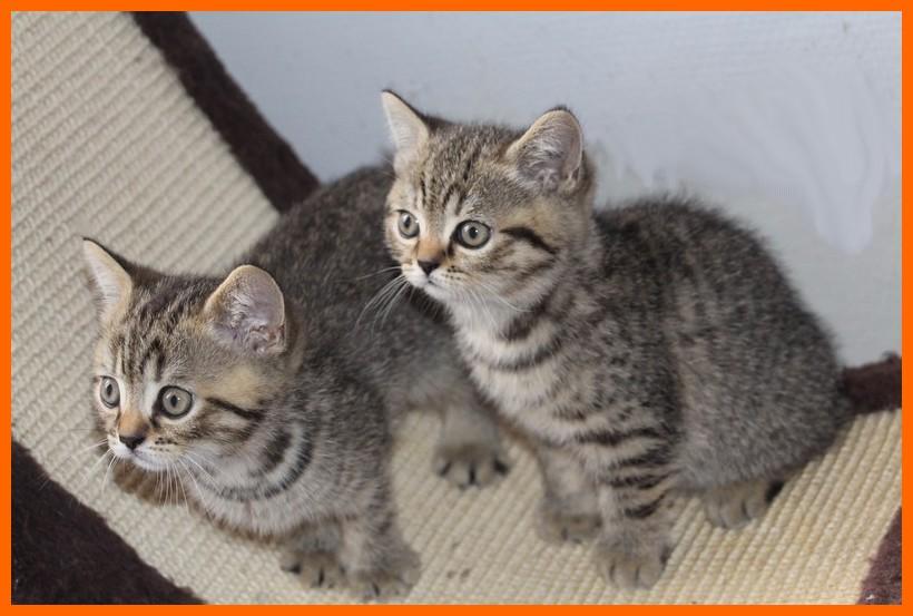 Mamzelle/Maona (à droite) à presque 2 mois