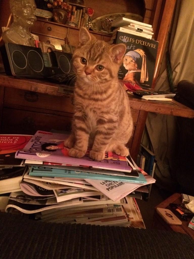 """Dans sa nouvelle maison, Messidor, chef d'oeuvre vivant devant le livre des """"Chefs d'oeuvre-chats""""..."""