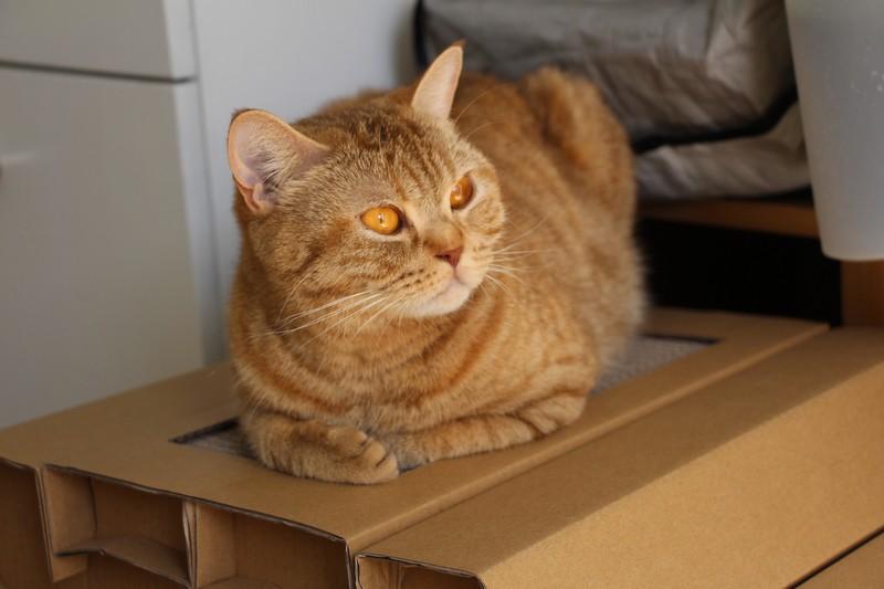 Finalement c'est confortable un toit de maison en carton !